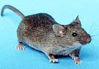 odstraszacz_myszy
