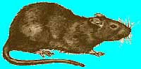 odstraszacz_szczurów